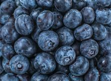 Close up shot from above to pile of blueberries. royalty free stock photography