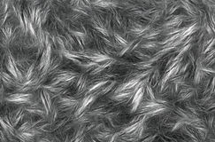 Close up shot of abstract fur background royalty free stock photo
