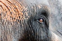 Close-up shot of Asian elephant eye Stock Photos