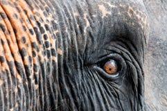 Close-up shot of Asian elephant eye Royalty Free Stock Photography