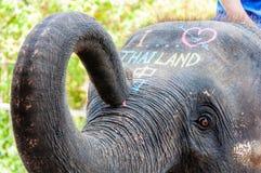 Close-up shot of Asian elephant head Royalty Free Stock Photo