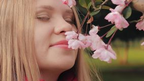 Close-up shot of attractive girl sniffs pink blossoms, woman enjoys smell of blossoming cherry flower blooms on branch. 4k slow motion close-up shot of stock video