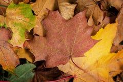 Close up shot of autumn sidewalk Stock Photos