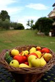 Basket full of fresh fruits and vegetables in the garden stock photography