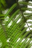 Close-up shot of beautiful fern leaves. For background Royalty Free Stock Photo
