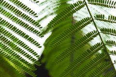 Close-up shot of beautiful fern leaves on blurred. Natural background Stock Photos