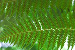Close-up shot of beautiful fern leaves. For background Stock Photo