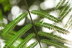 Close-up shot of beautiful fern leaves. On blurred background Stock Photo