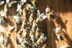 Close up shot of bees on apiary Stock Photos