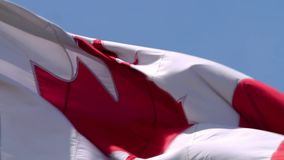 Close up shot on breathtaking red white maple flag national symbol Canada banner waving in wind on blue sky background. Close up shot on fascinating red white stock footage