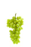 Close up shot of bunch of grape Stock Photography