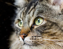 Close Up Shot of Cat Looking Away From Camera Stock Image