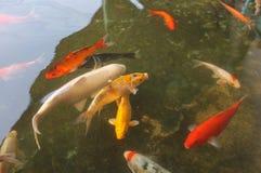 Fish in the pool at Kaeng Khoi Junction NO.2 stock photos