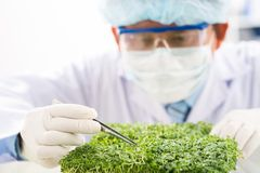 Concentrated Biotechnologist at Work royalty free stock photo