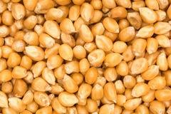 Close up shot of corn seeds (textured) Stock Photos
