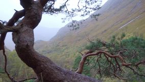 Close up shot of a crooked pine tree on a path on Glen Nevis. On the background a perfect misty autumn colored scenery is scene, with mist covering the tops of stock video