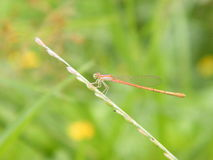 DRAGON FLY. CLOSE UP SHOT OF DRAGON FLY Stock Images