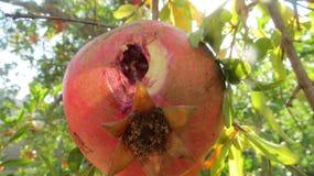 Eaten Pomegranate Royalty Free Stock Photos