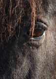 Horse Abstract Stock Images