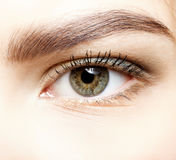Close-up shot of female eye makeup. Stock Images