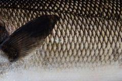 Close up shot of a fish Royalty Free Stock Photo