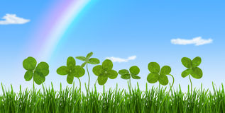 Close-up shot of four-leaf clovers in a field. Royalty Free Stock Photo