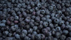 Close up shot of fresh blueberries, an excellent fruit to make juice, jam, cakes, pastries. the concept of nature, fresh. Fruit and blueberries stock video
