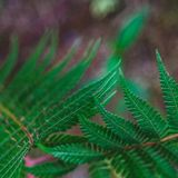 Close-up shot of fresh fern leaves. For background Stock Images