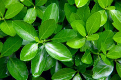 Close-up shot of green bush Stock Photo