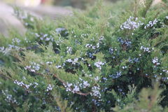 Close-up shot of green bushes Stock Photo