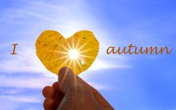 Close up shot of hand holding yellow leaf of heart shape with sun rays shining through it at light blue sky background with letter stock photography