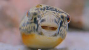 Close up shot of head of fish. Animals and nature concept stock footage