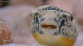 Close up shot of head of fish. Animals and nature concept stock video