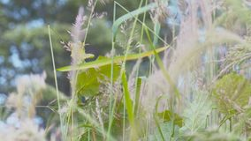 Close-up shot of herb swaying in the gusting wind. Close up shot of herb swaying in the gusting wind stock video footage