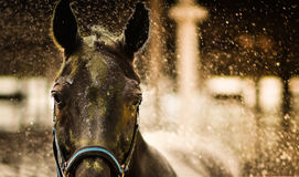 A close up shot of a horse`s face with water splash Stock Photo