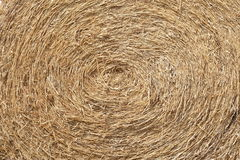 A close-up shot of a large bail of hay, roll of hay Royalty Free Stock Photo