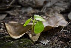 Close up shot of leaf