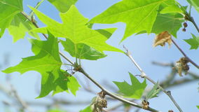 Close-up shot on the leaves moving with a light breeze under sunlight stock video footage