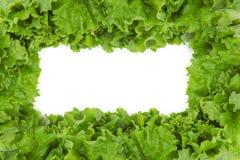 Close up shot of lettuce in frame shape Stock Image