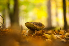 Close up shot of a mushroom on forest ground Stock Photos