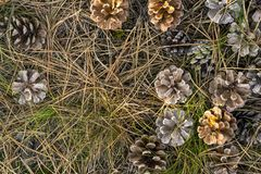 Forest floor Stock Photography