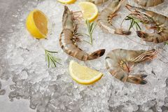 Close-up Shot Of Raw Shrimps With Rosemary And Lemon Slices On Crushed Ice Stock Photo