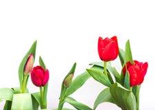 close up shot of orange tulips . Stock Photos