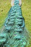 Close up shot of a peacock's fan Stock Photos