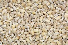 Close up shot of pearl barley grain(textured) Royalty Free Stock Photos