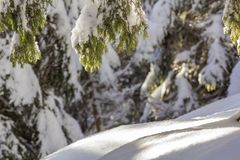 Close-up shot of pine tree branche with green needles covered with deep fresh clean snow on blurred blue outdoors copy space stock photography