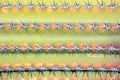 Close up shot,Prickly cactus background Royalty Free Stock Photo
