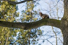 Squirrel on a tree on a sunny day stock photos