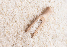 Close up shot of the rice Stock Images