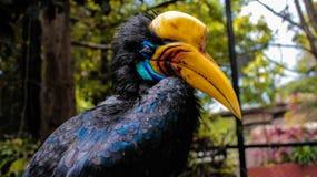 Rangkong Bird In Batu Secret Zoo Malang Stock Image Image Of Close Indonesia 137813221